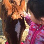 granddaughter petting horse