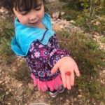 Young girl picking raspberries