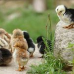 Enjoy the Health Benefits of Eggs!