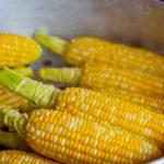Sweet corn in pot