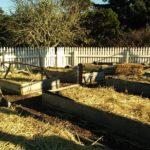 straw mulch on raised garden beds