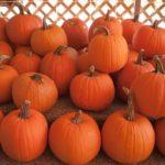 Pumpkins: the Magic of Fall