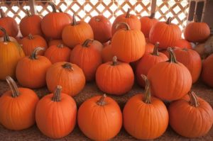 autumn pumpkins in a pile