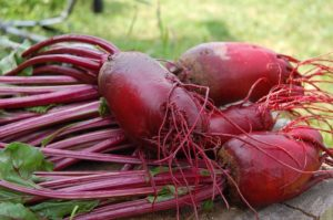 beets washed from the garden