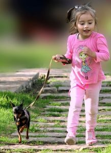 Young girl walking small dog