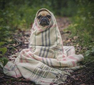 small dog wrapped in a blanket