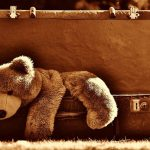 Brown Teddy Bear in Brown Trunk