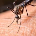 mosquitoe on skin
